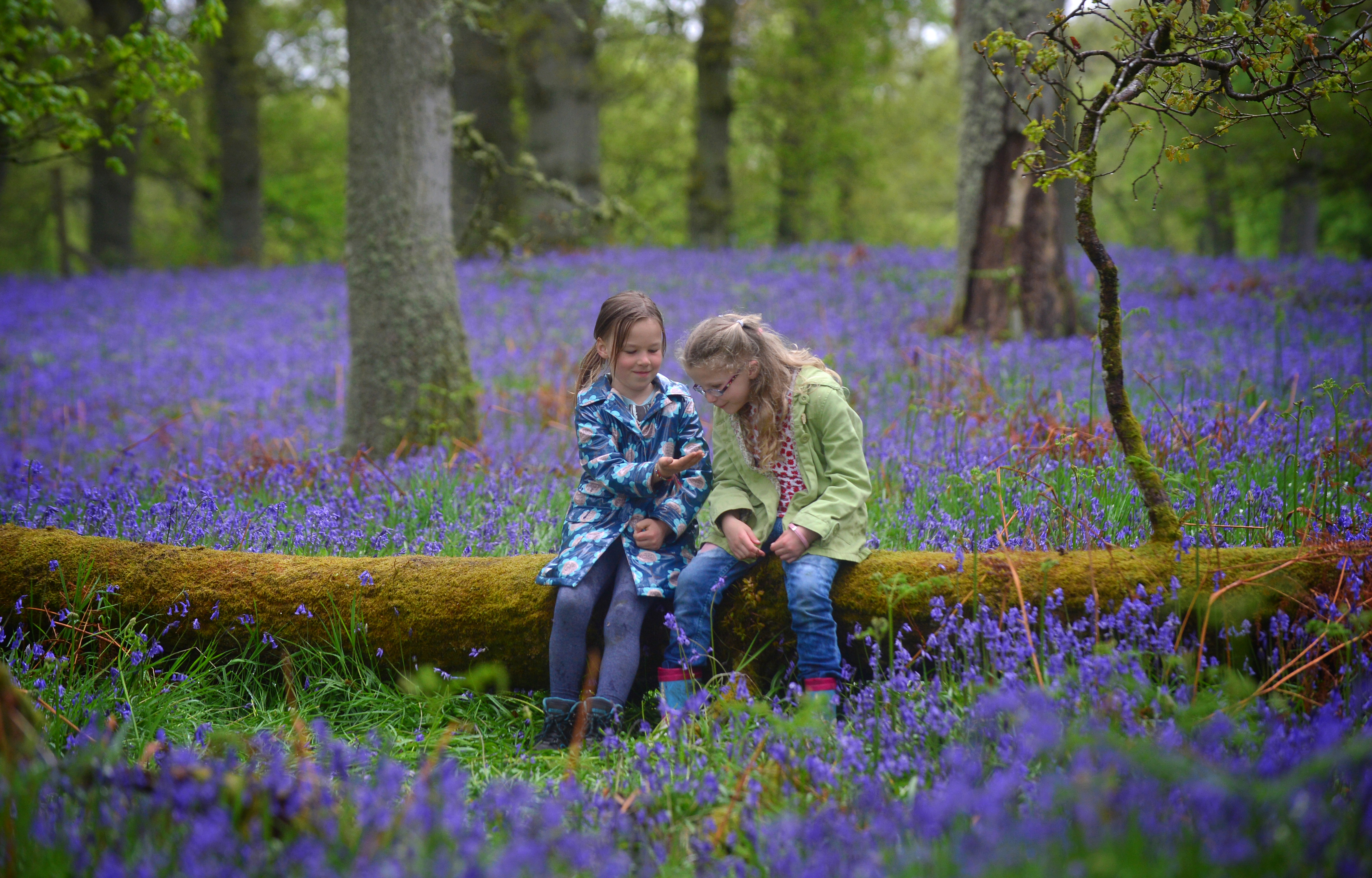 Kinclaven Bluebell Woods.