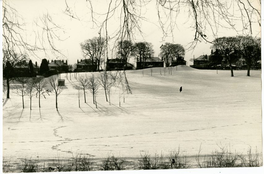 Balgay Park Under Snow. January 13, 1987.