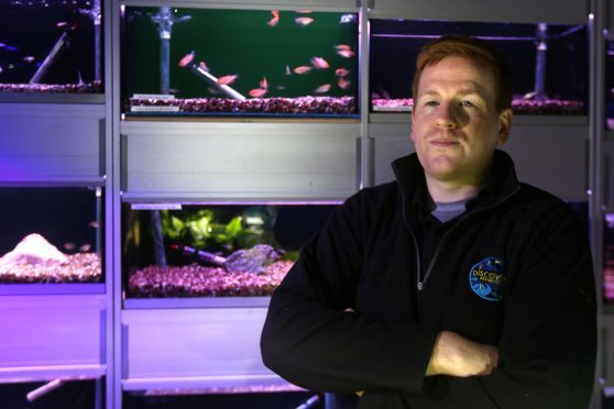 Kris Rennie with some of his fish tanks at Discovery Aquatics.