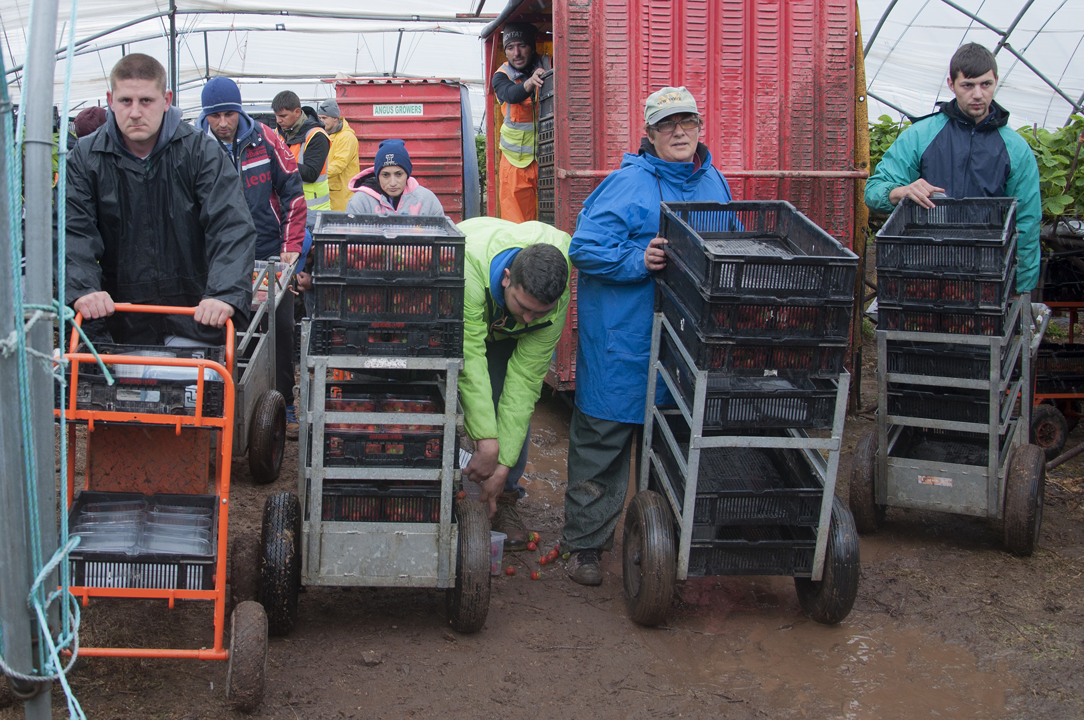 The number of EU nationals wanting to work in the UK's agricultural industry is declining