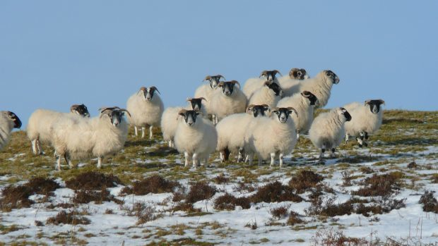 A survey of 400 Scottish sheep farmers revealed people were getting conflicting advice which discouraged them from acting on it.
