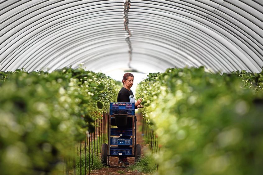 A fruit farm in Perthshire.