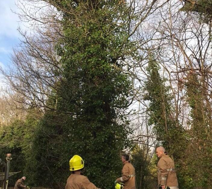 Firefighters try to entice the cat down from the tree.