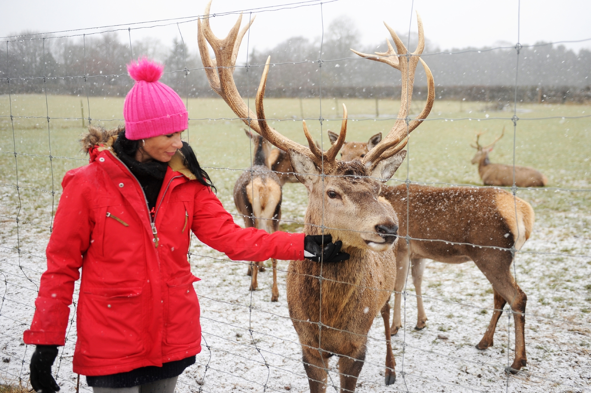Gayle meets Argyll the stag at the Scottish Deer Centre.