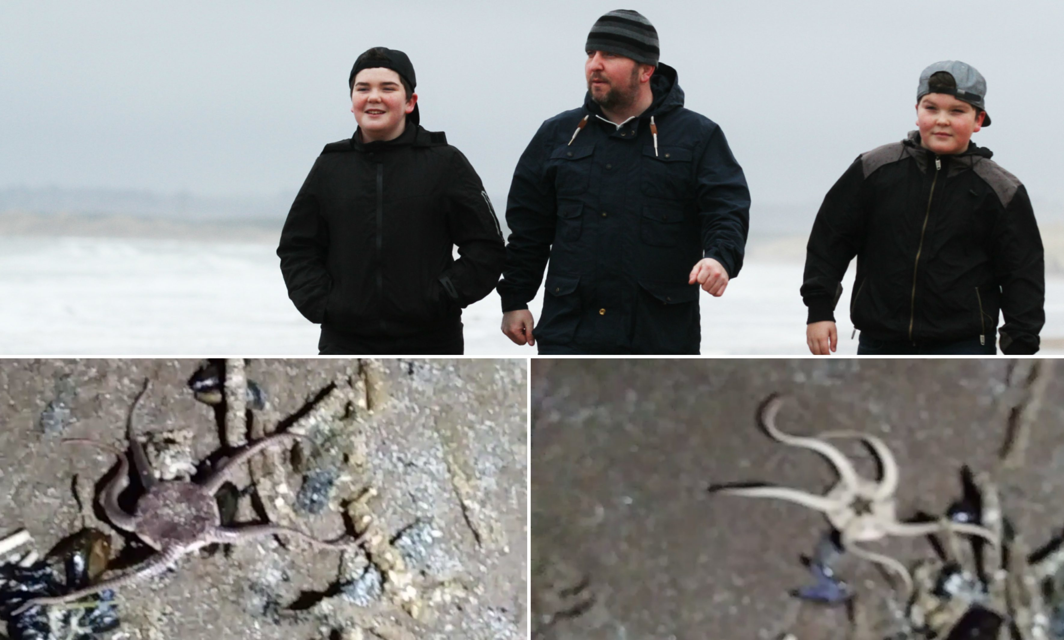 David Simpson and his two sons Dylan and Joshua found the creatures on Montrose Beach.