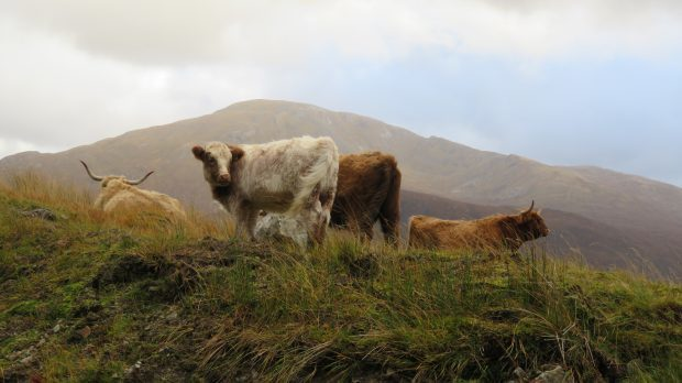 Future farm policy in England may not suit conditions in the devolved nations