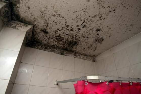 Specific inspections relating to damp have fallen to zero in Dundee.
