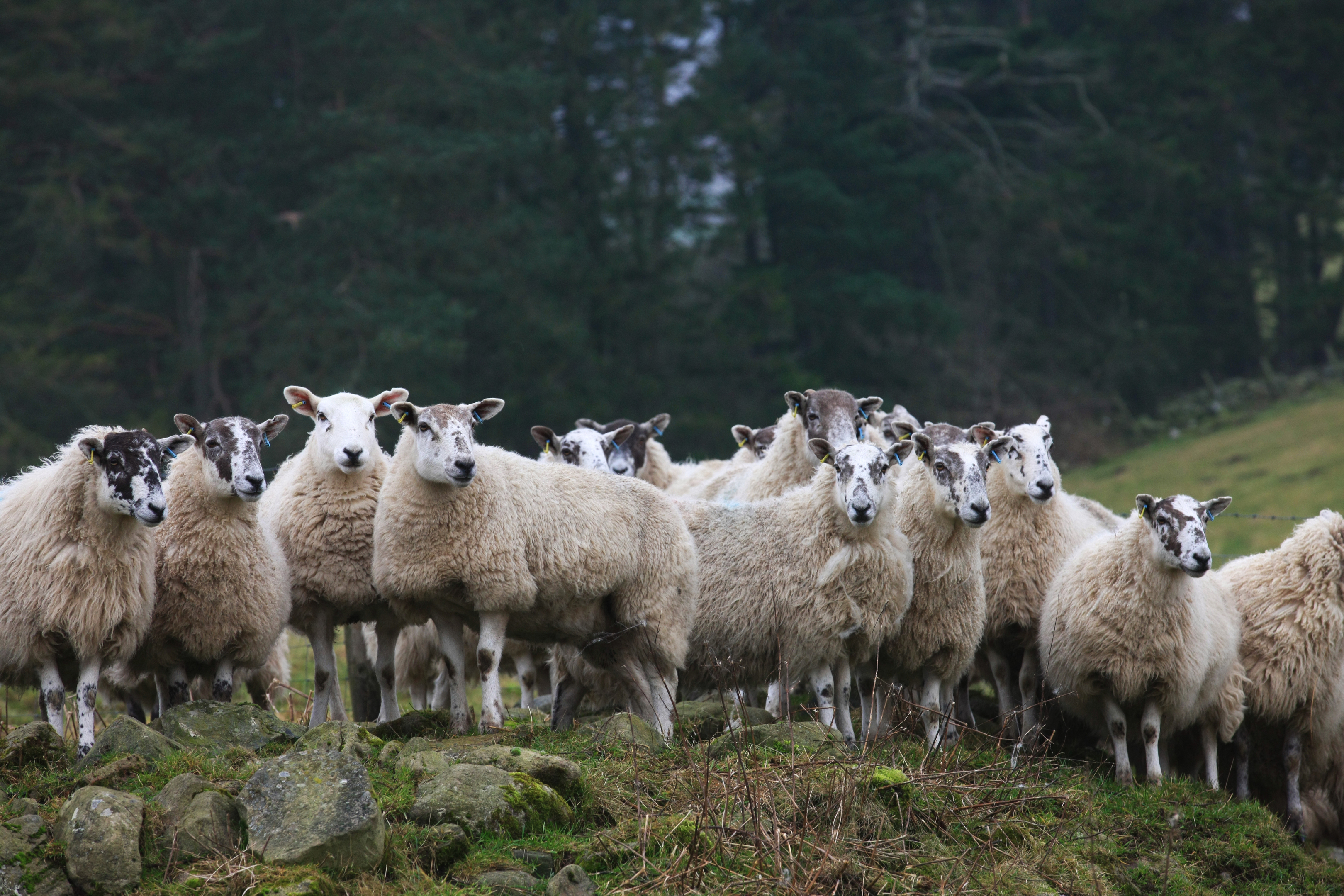 Dog owners are urged to keep their pets under control around sheep.