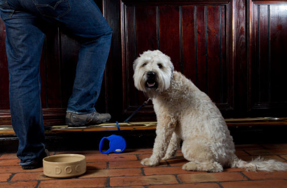 There's no need to leave your dog at home if you pick the right pub.