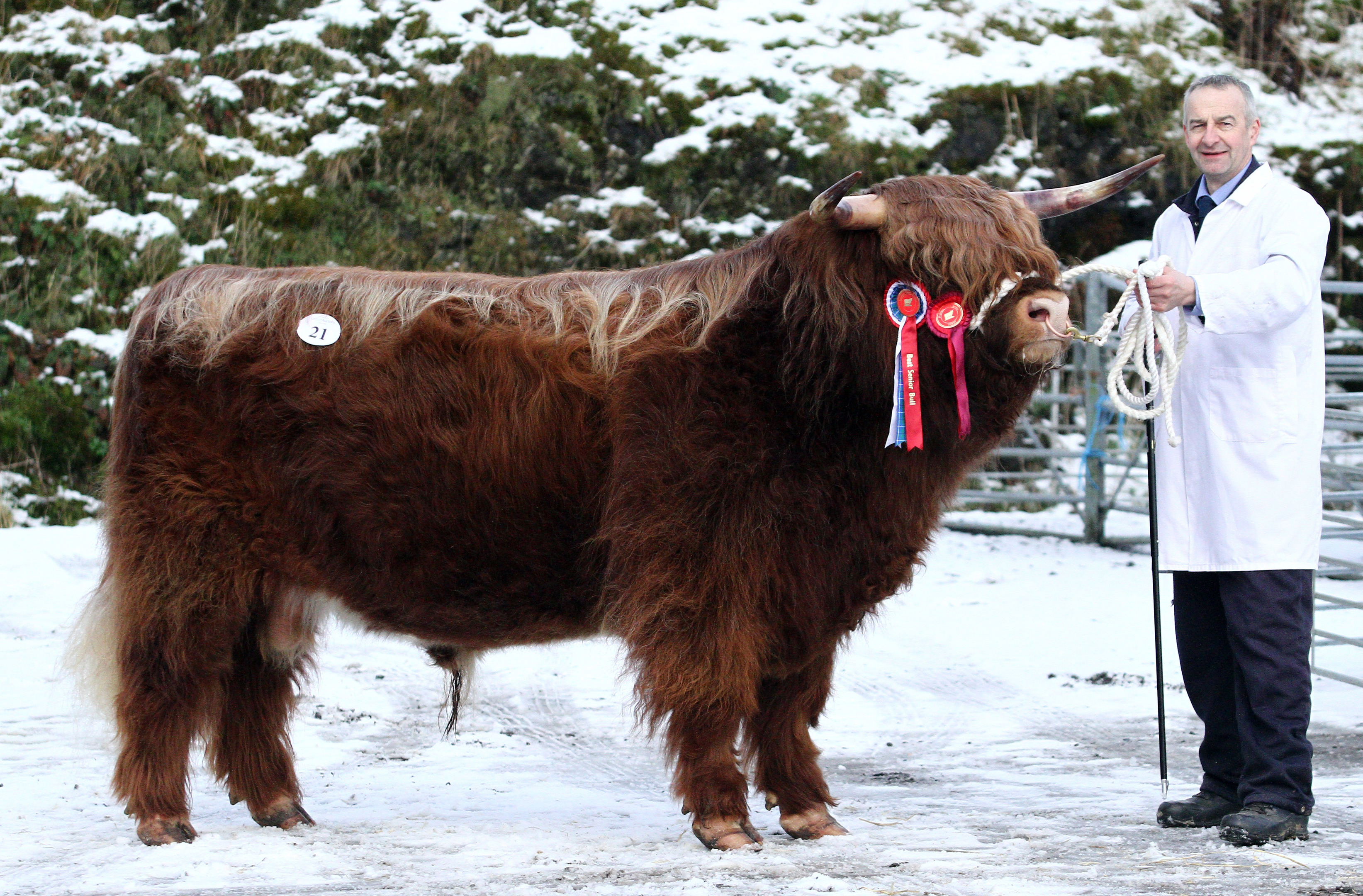 Castles Estate at Dalmally bought the reserve champion, Eoin Mhor 17th of Mottistone for 10,000gns