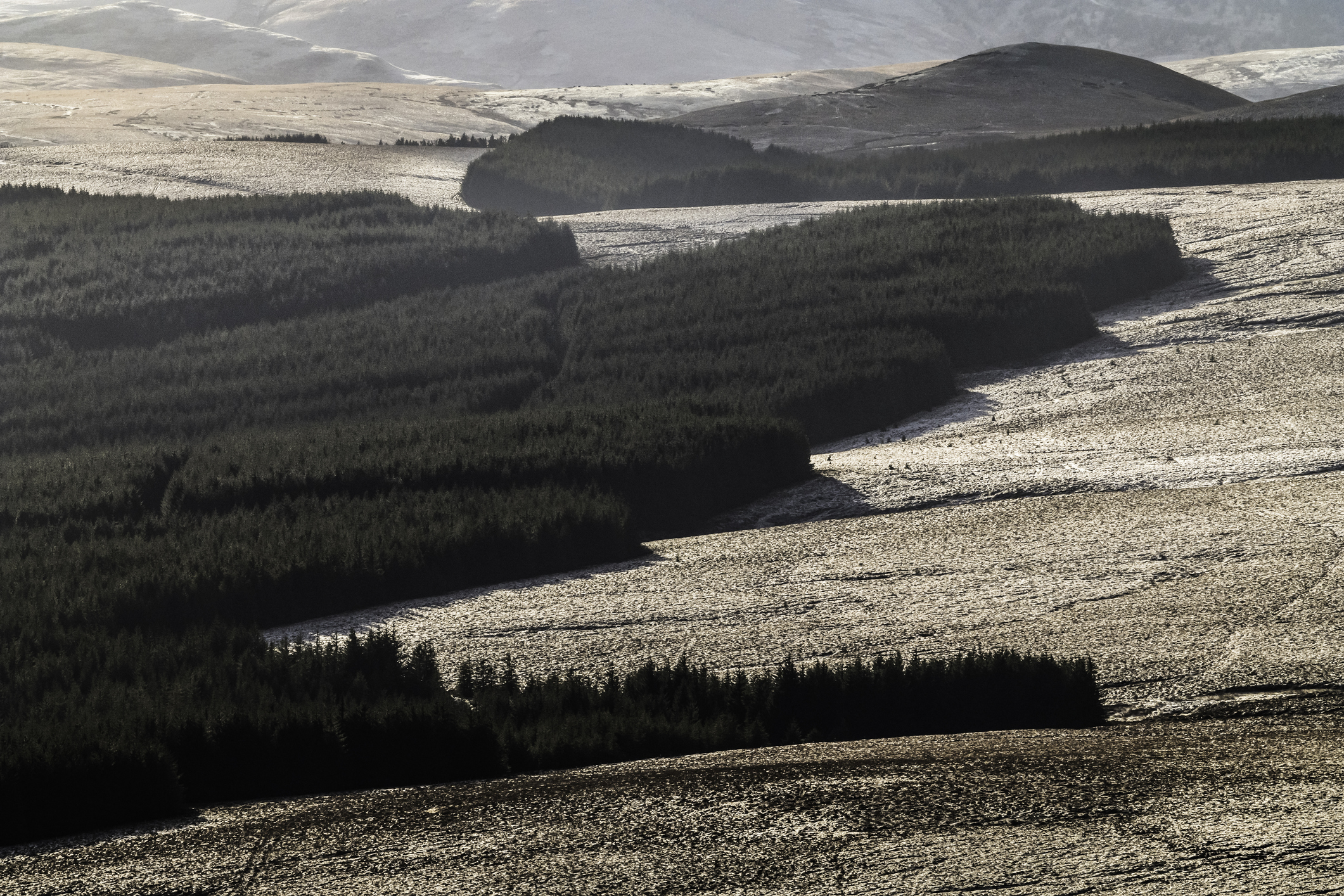 The planting of commercial forestry on hill land in the south of Scotland has been controversial.