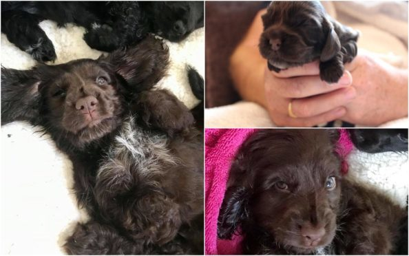 Photos of Poppy from her short life.