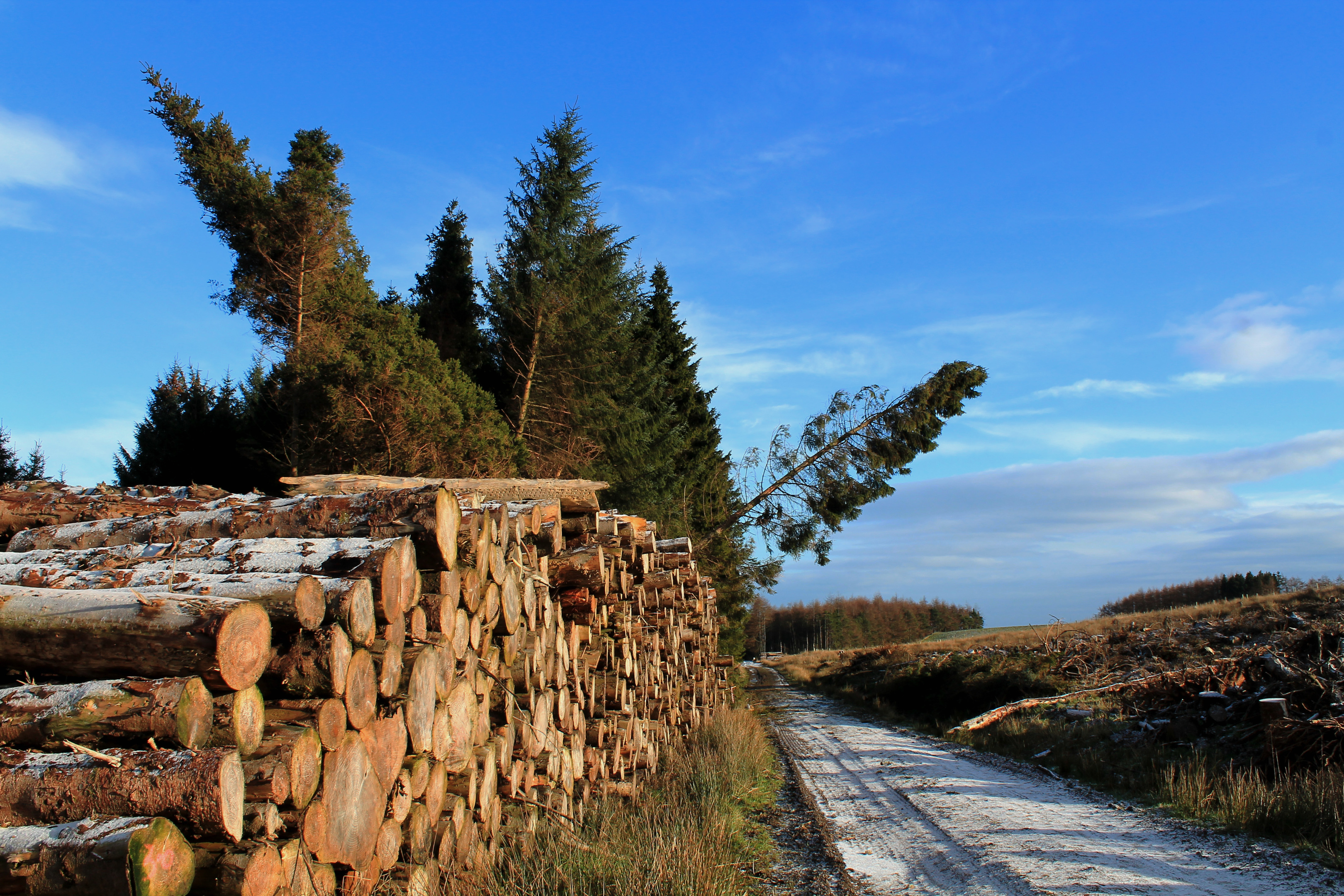 The volume of Scottish timber to be harvested is predicted to rise by 14% by 2025.