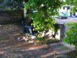 The neglectd garden has become an eyesore