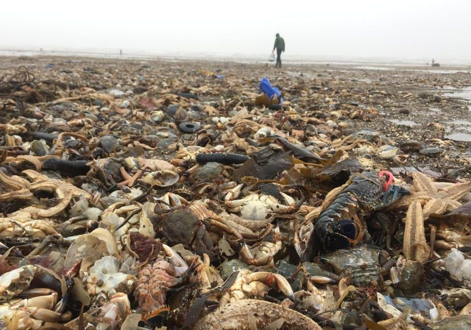 Dead sea creatures washed up on the Yorkshire coast