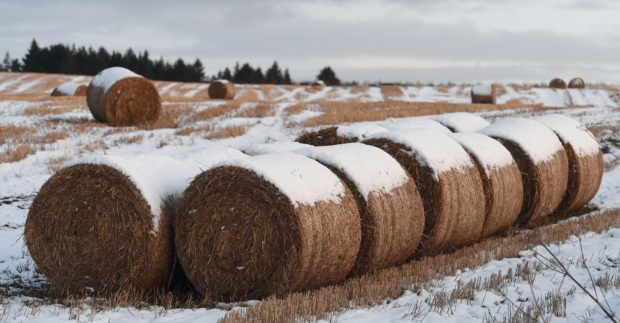 The SRUC's study into spot market straw prices warns that farmers will face higher costs