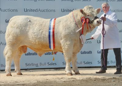 Charolais champion at Stirling May Bull Sales 2018, Firhills Majestic, from Jim and Alison Muirhead of Firhills Farm, by Arbroath.