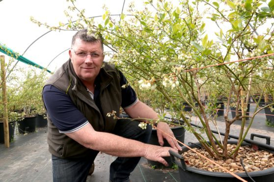 Allen Innes, farm manager at East Seaton farm in Arbroath, has been shortlisted in the Soft Fruit Grower of the Year category at the Horticulture Week awards.