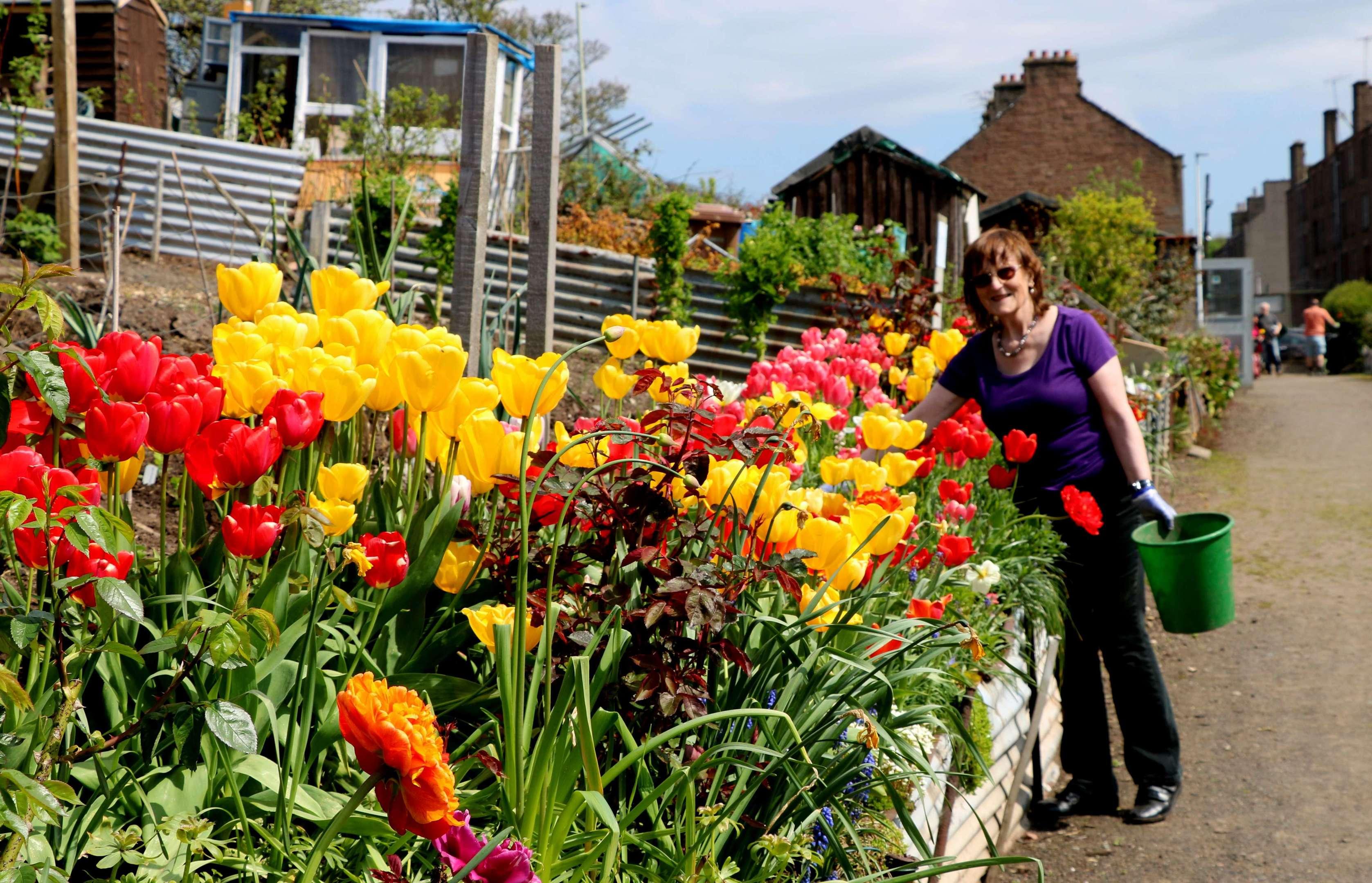 Anna weeding flower border at City Road allotments