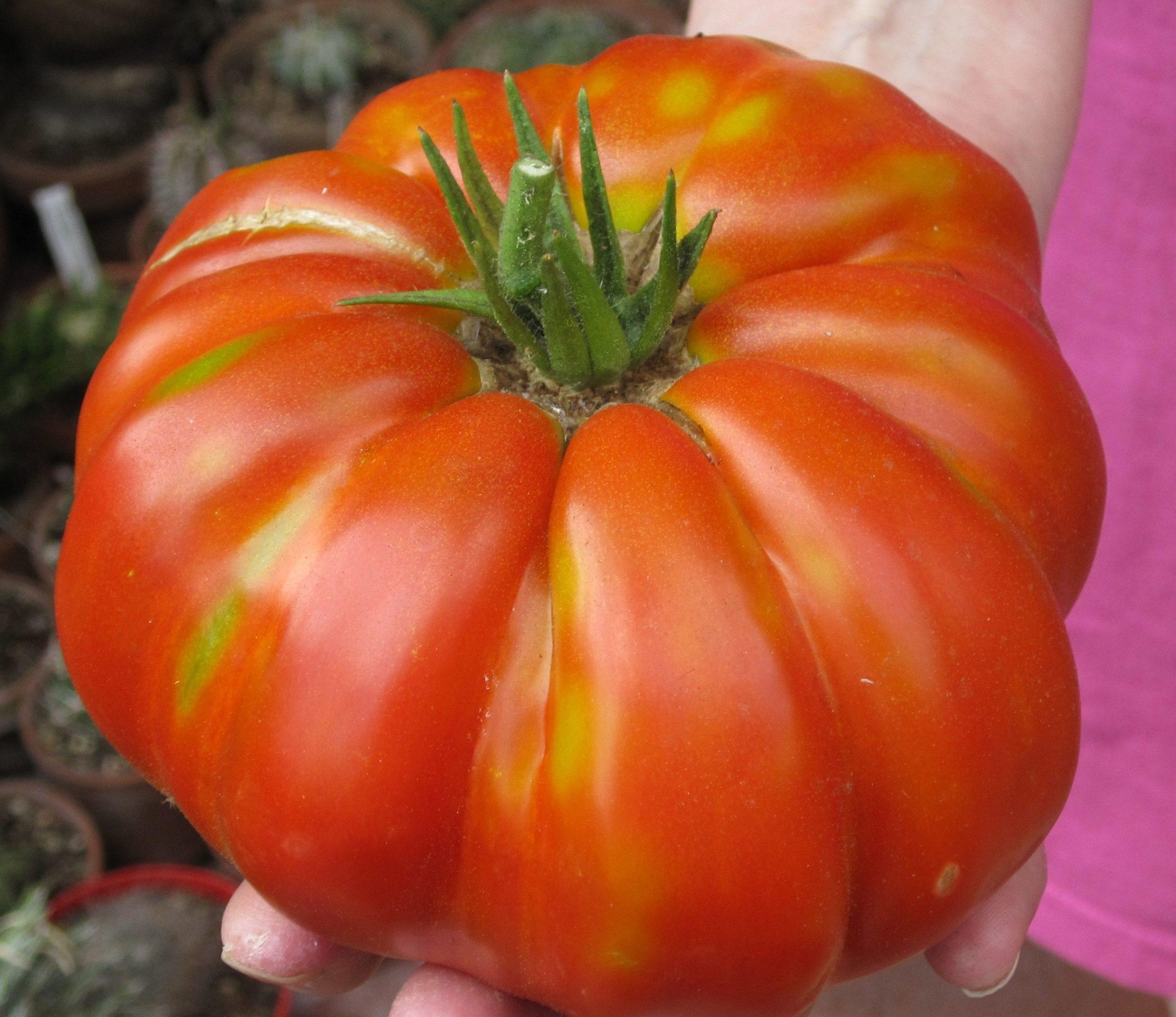 Beafheart tomato