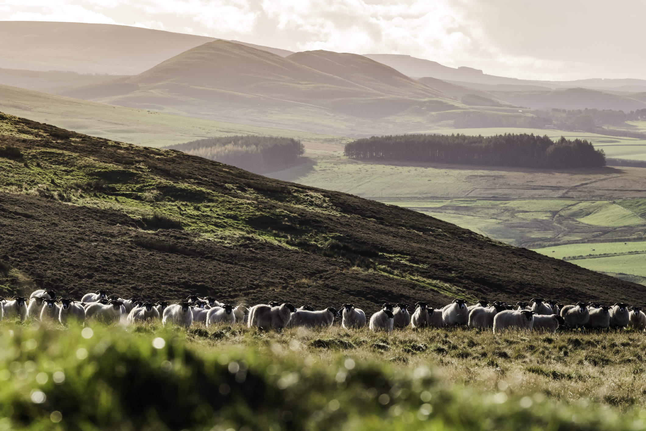 Scotland is on track to meet 2020 biodiversity targets with improvements to peatlands, rivers and woodlands.