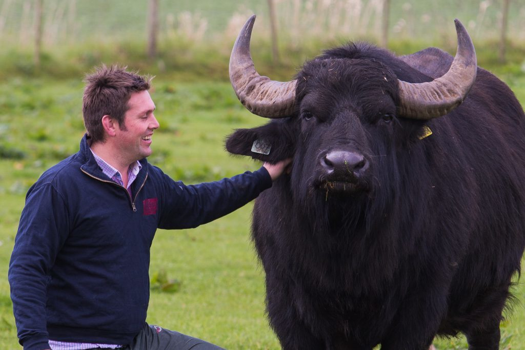 Steven Mitchell with one of his buffalo