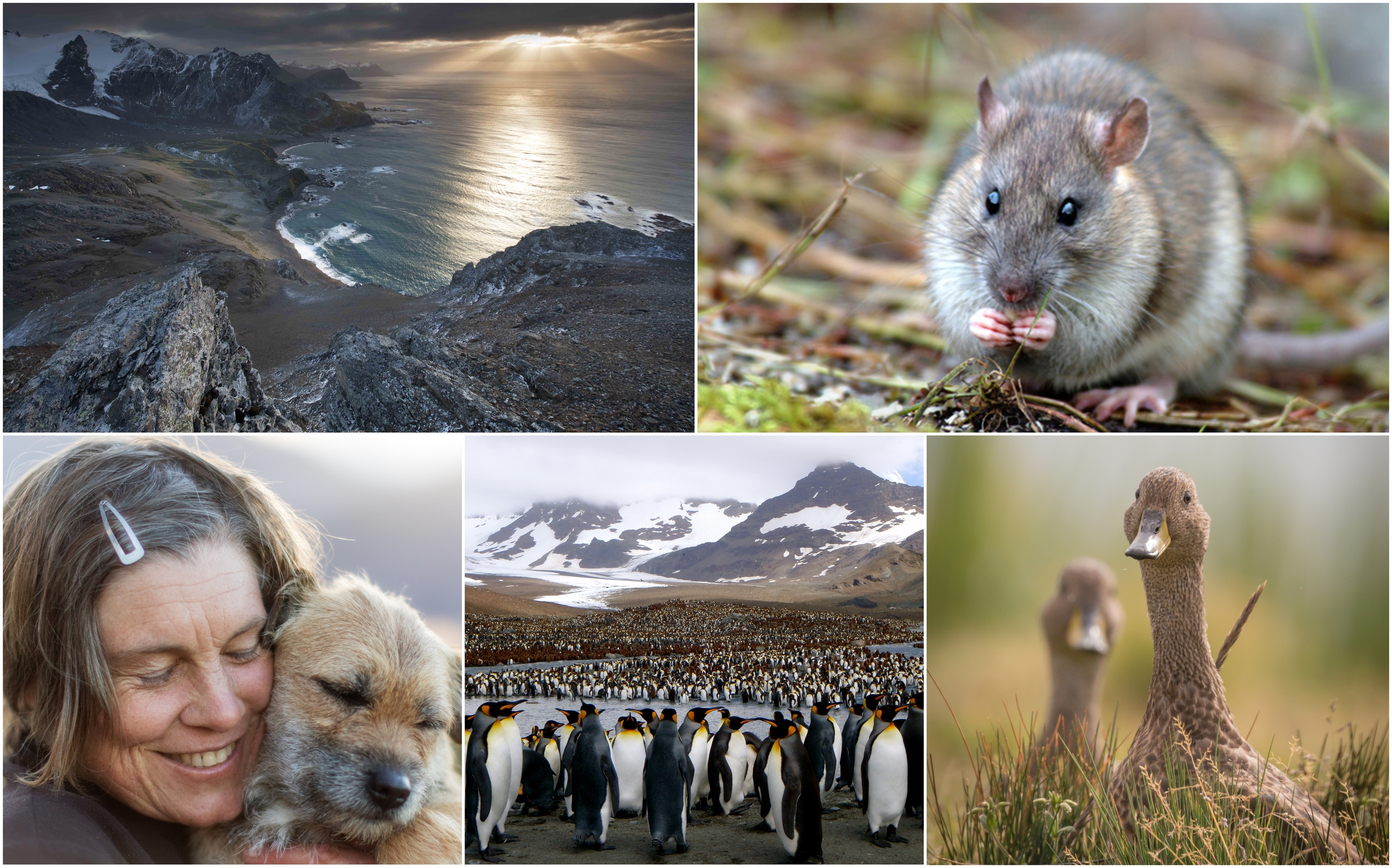 An incredible team effort means South Georgia's wildlife is now protected from invasive rodents first introduced to the island by man over 200 years ago.