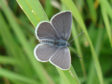 The small blue.