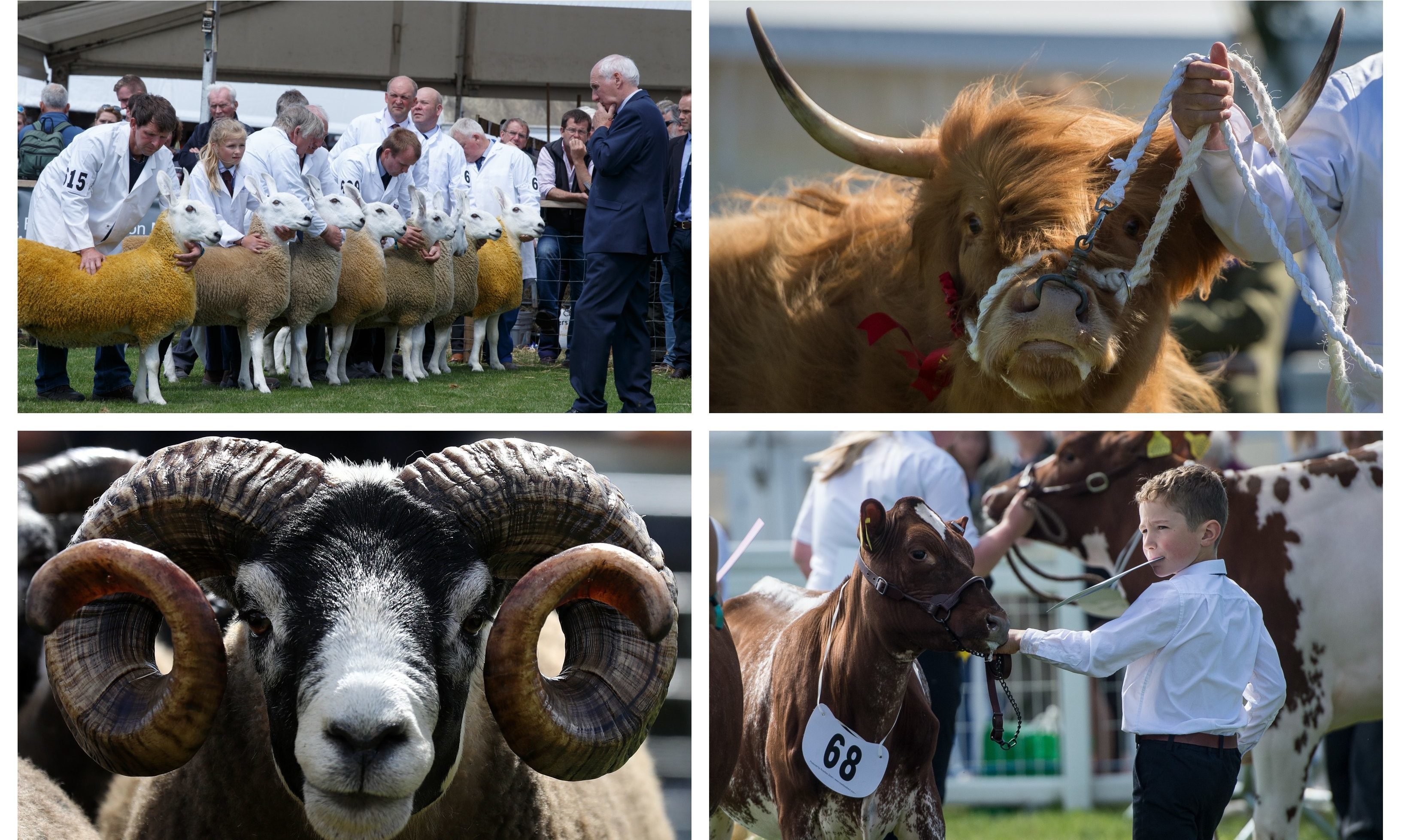 Photos from the 2018 Royal Highland Show.