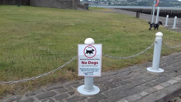 The sign, which has now been moved, appears to be disregarded by one errant pooch.