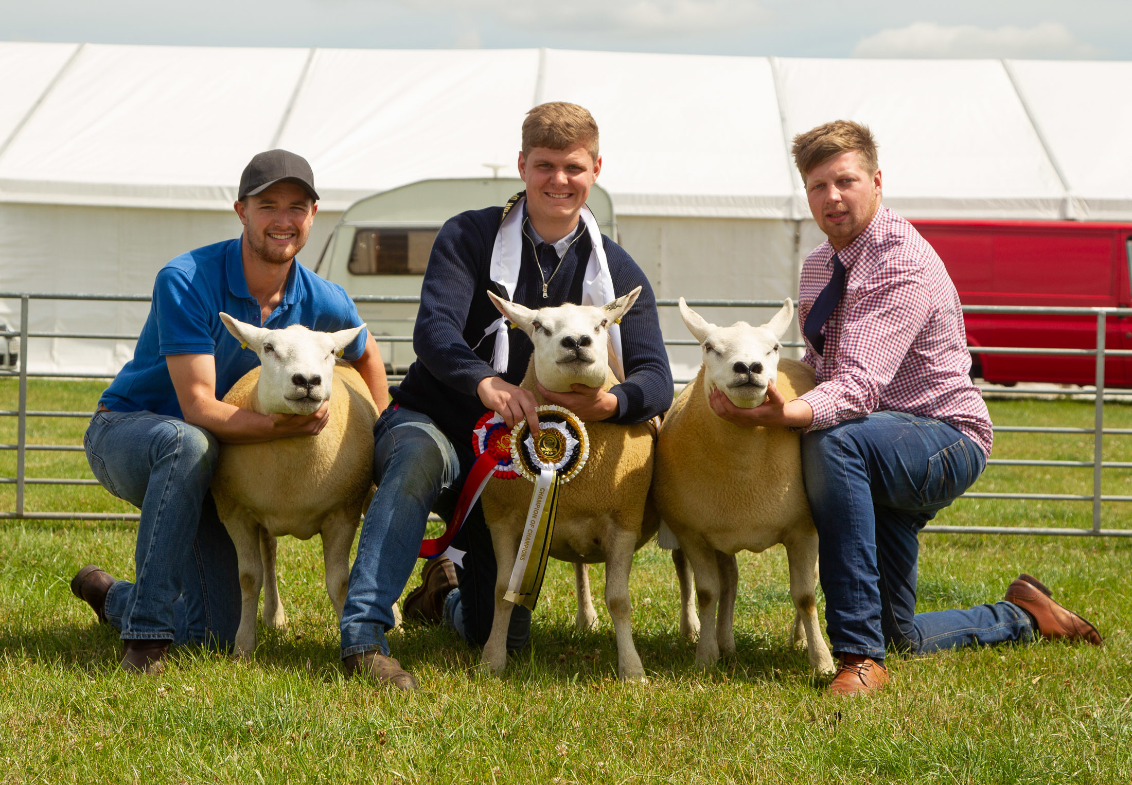 Three Texel cross gimmers won the sheep interbreed competition