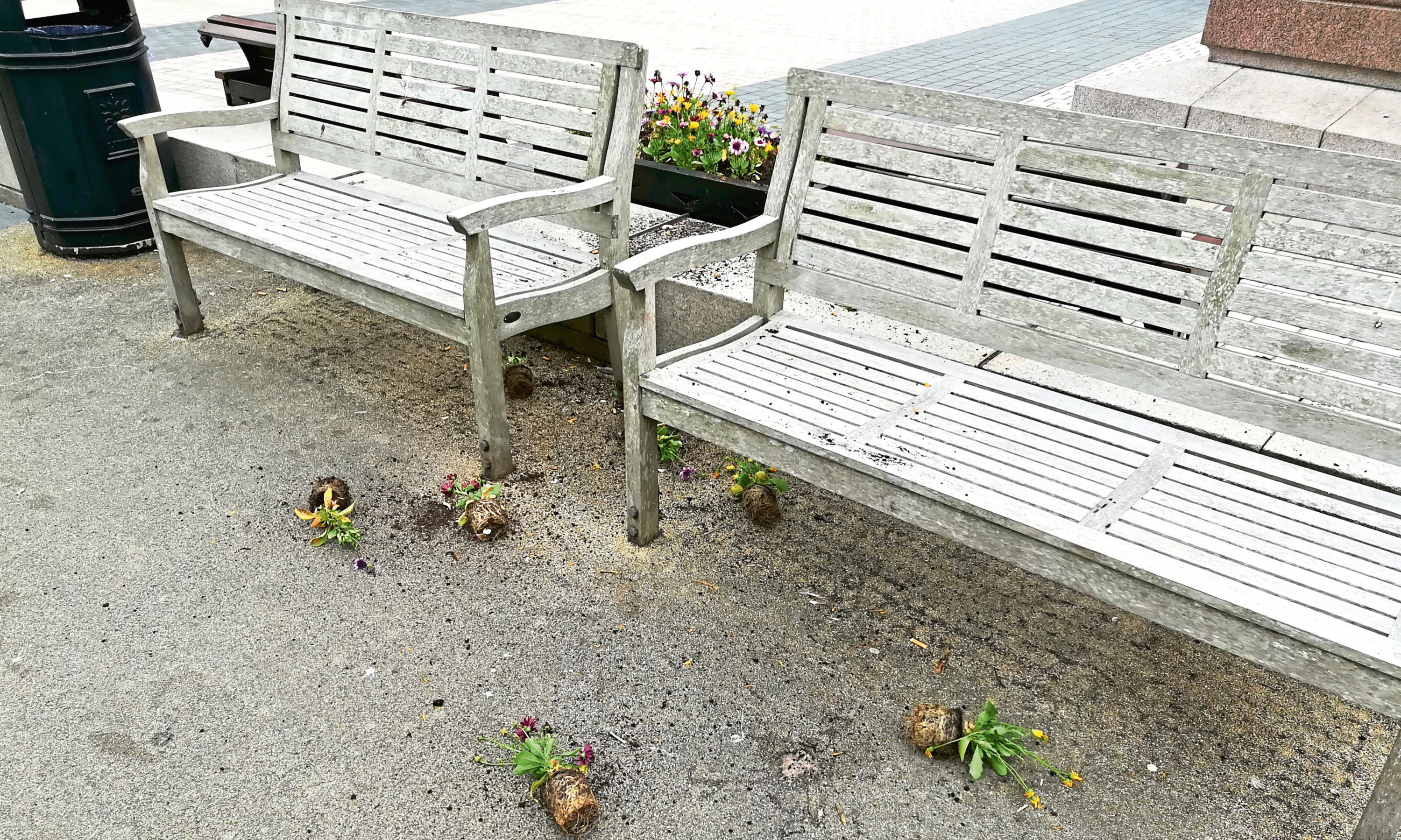 Pathetic: Flowers strewn on the ground after being ripped from a planter in Meadowside, Dundee.