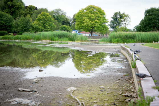 Shrinking water levels at the South Inch Park pond have led to fears for the resident swans.
