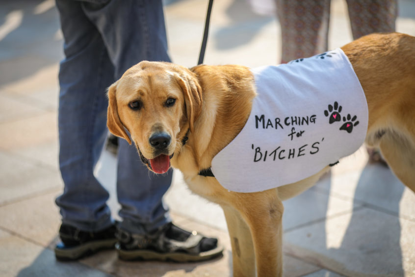 Frank the dog was among the protesters.