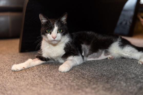 Levi the Cat.