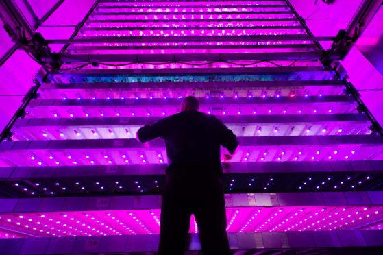 One of the development team members, Neil Skinner, checks on the lighting, IGS, James Hutton Institute, Invergowrie.