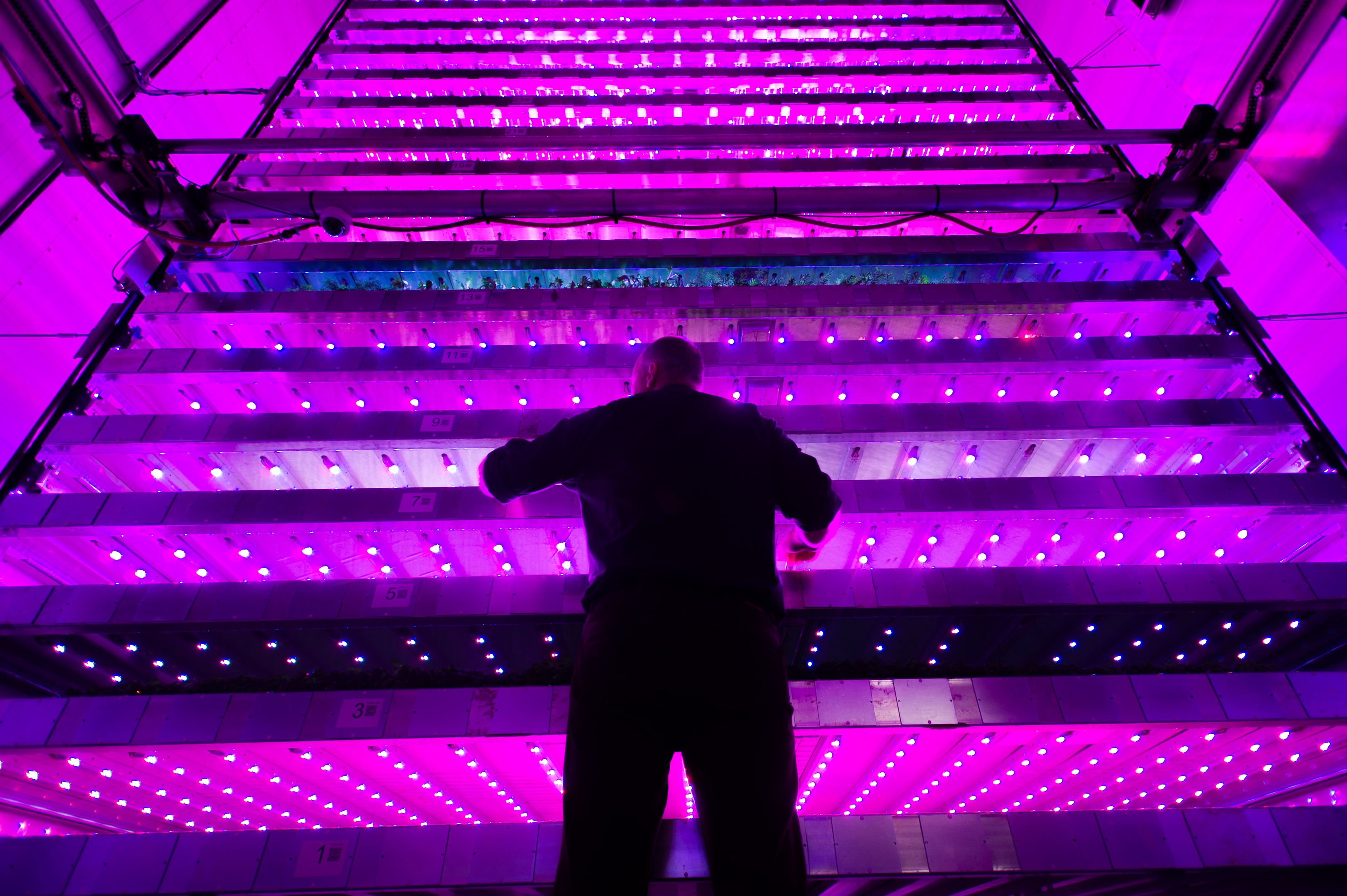 One of the development team members, Neil Skinner, checks on the lighting, IGS, James Hutton Institute, Invergowrie.