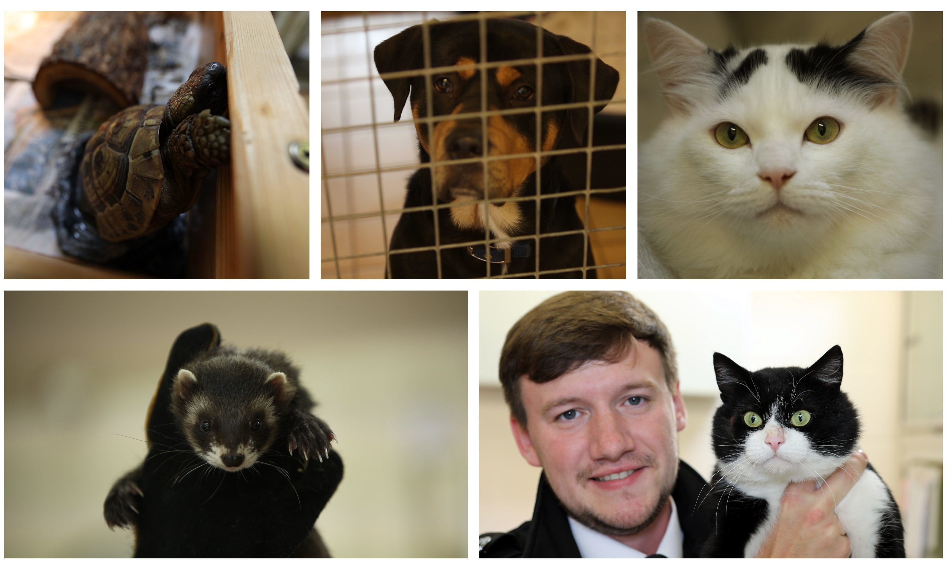 The Scottish SPCA Rehoming Centre in Petterden has had a busy summer.
