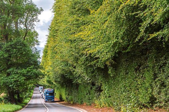 The Meikleour beech hedge.