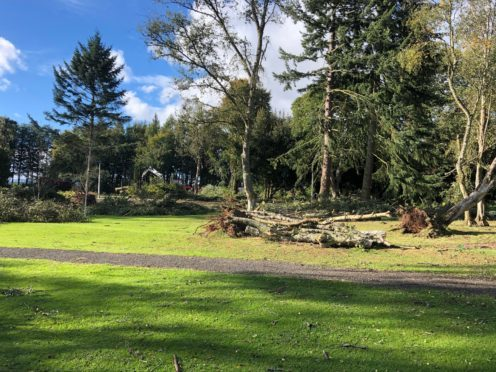 Around 20 trees have been damaged.