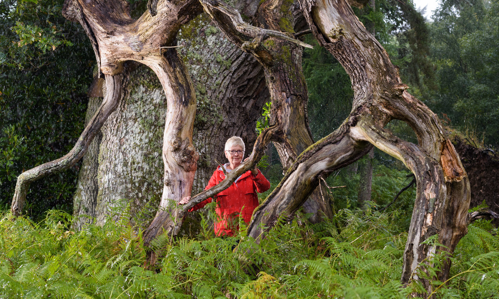 Judy Dowling by  Malloch's oak, Strathallan
