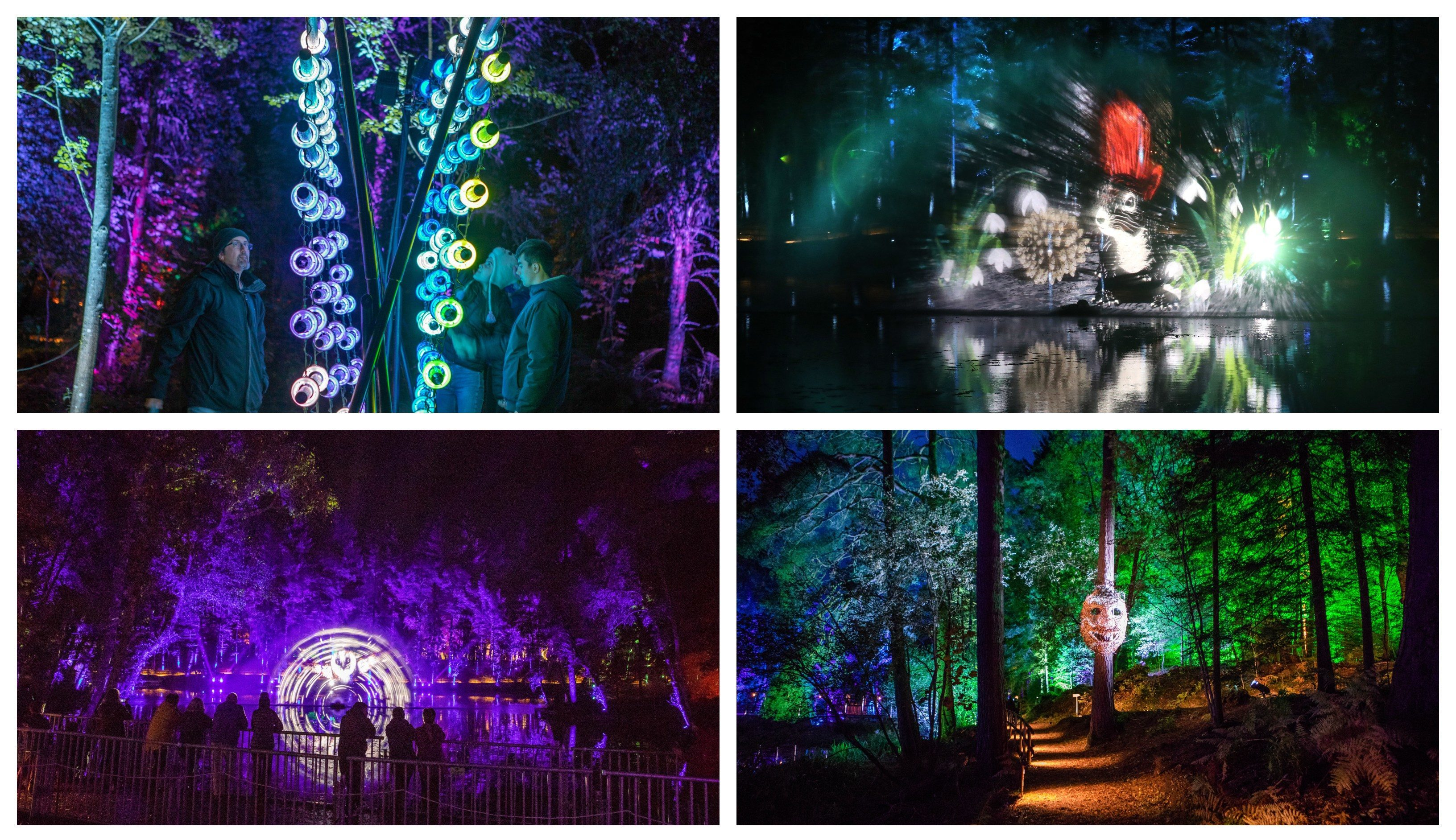Photos of the 2018 Enchanted Forest.