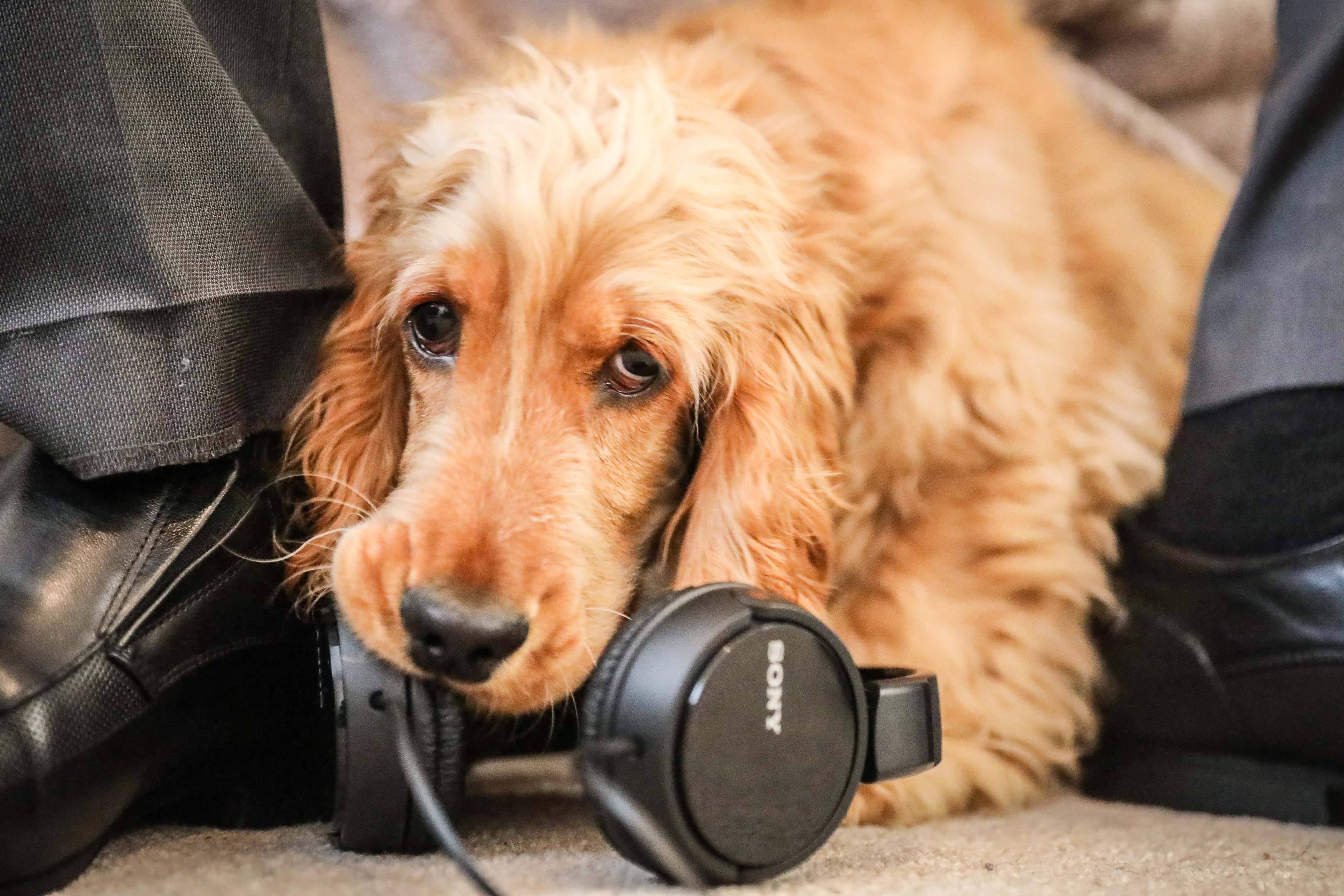 SSPCA have released theraputic music for dogs which will be available to stream over spotify, iTunes etc