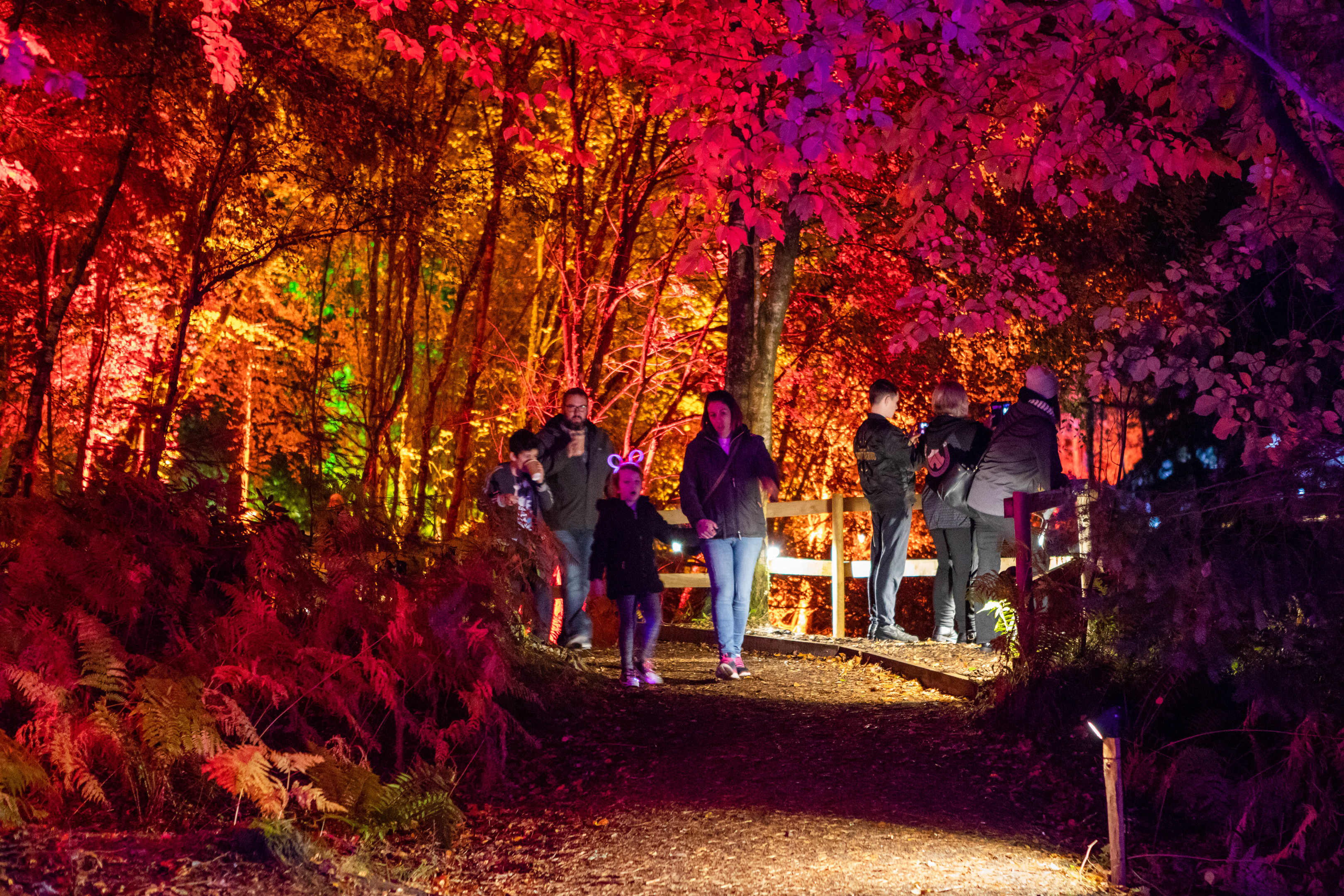 People enjoying the Enchanted Forest in Faskally Woods.