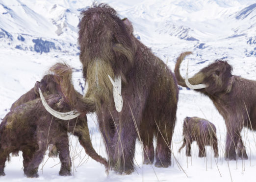 Woolly mammoths were around in the Ice Age.