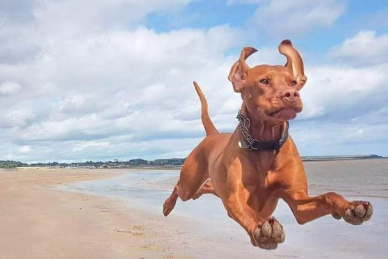 Zander the flying dog