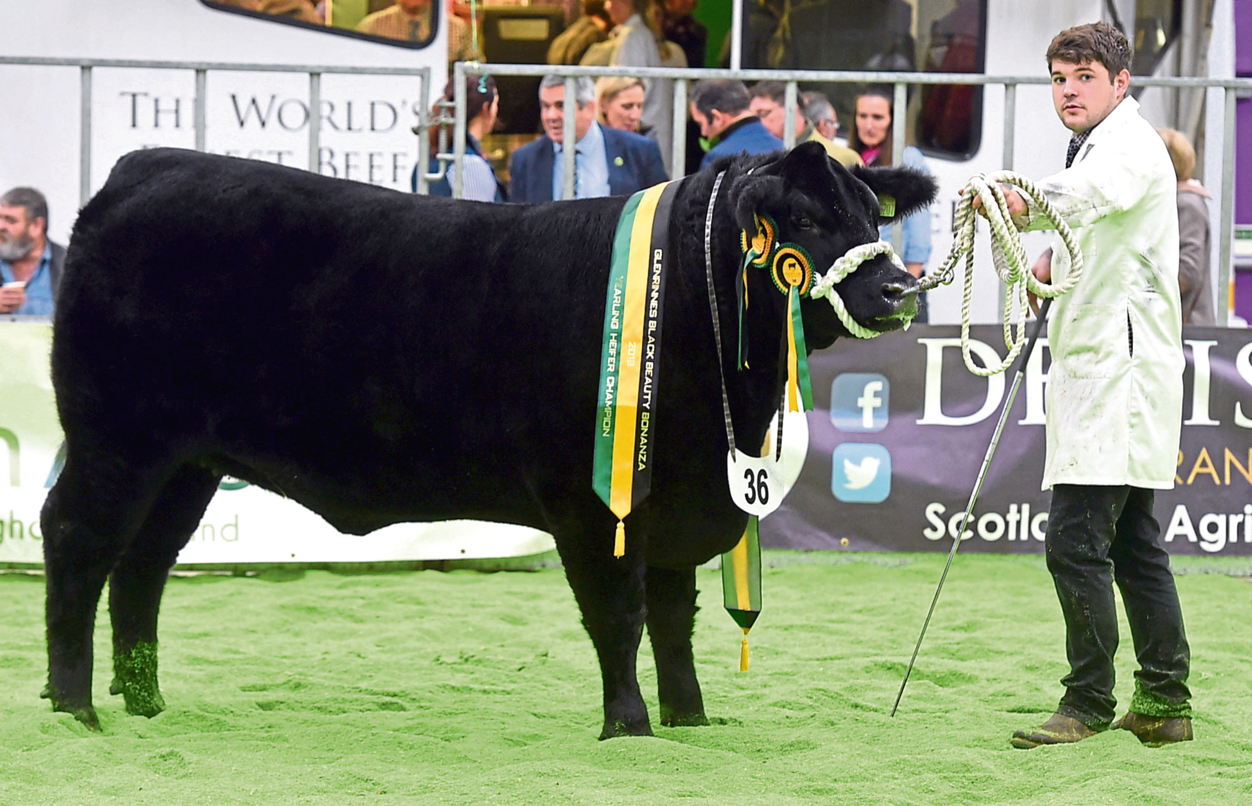 The Black Beauty Bonanza yearling heifer champion from Donald Rankin.
