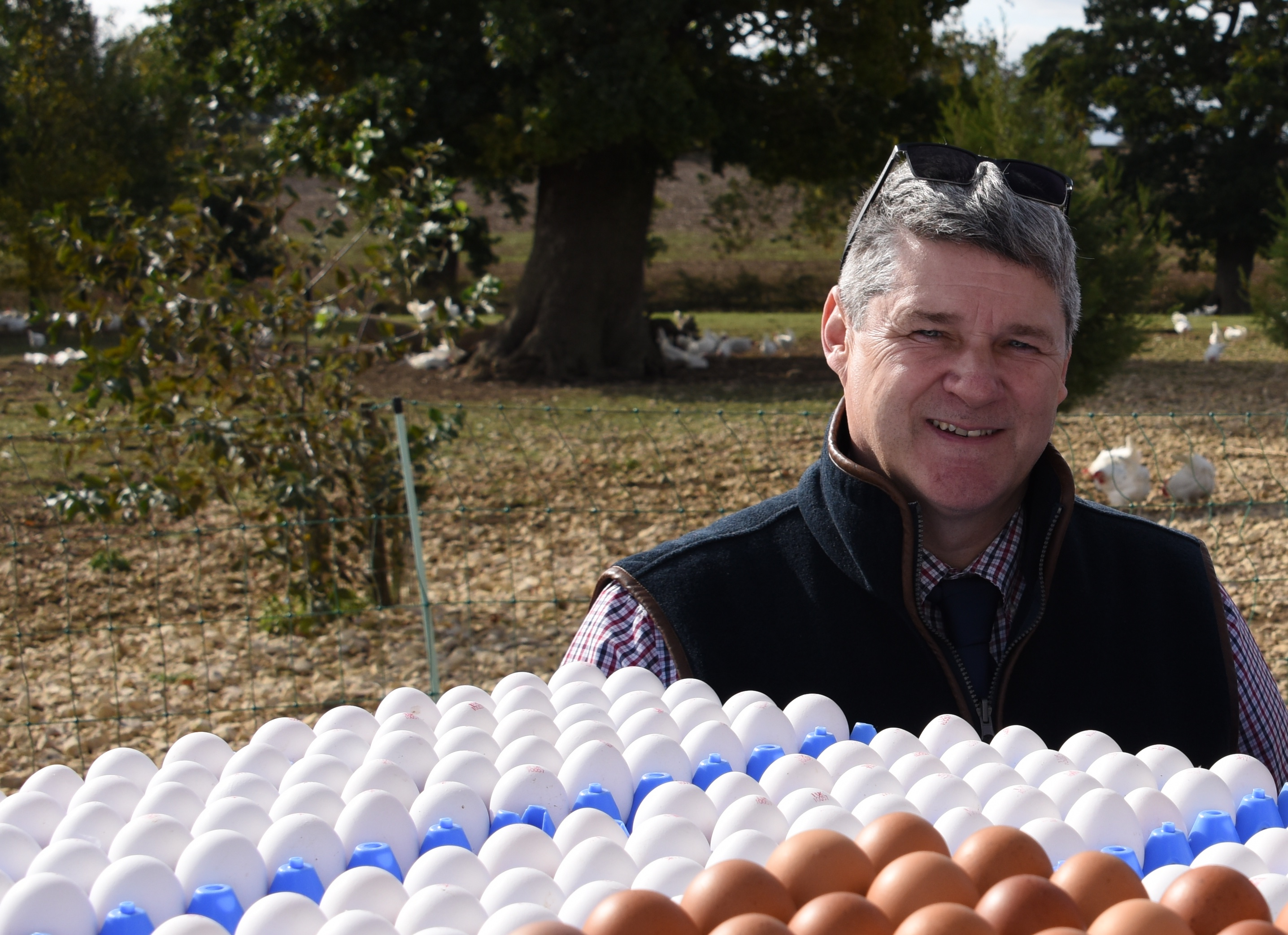 A change in buying habits would be better for hens and farmers.
