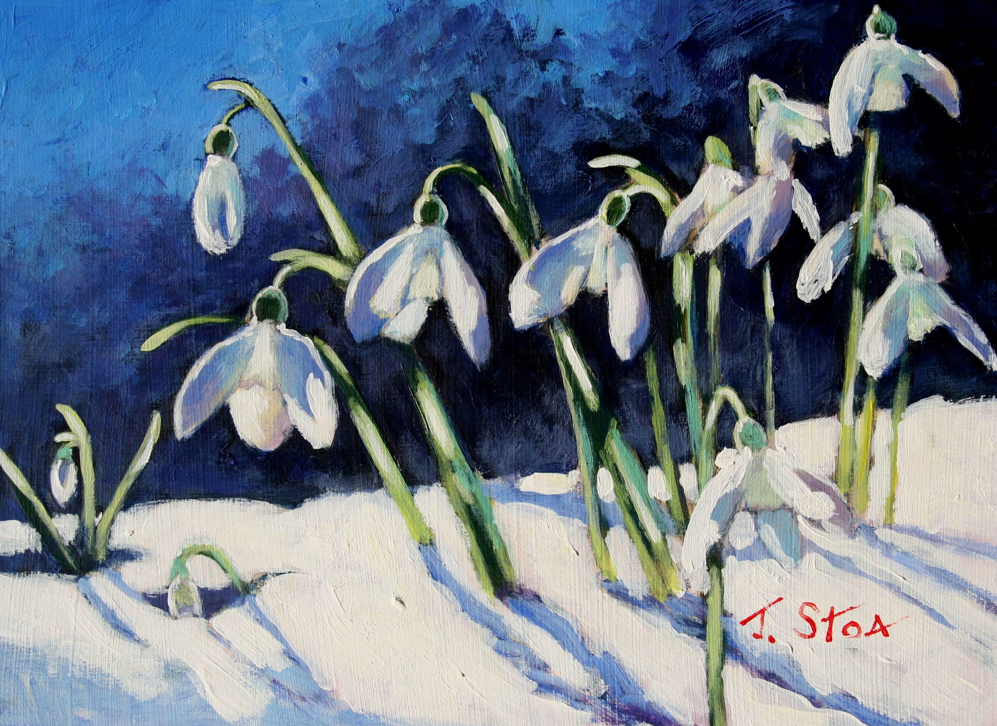 Sunlit Snowdrops