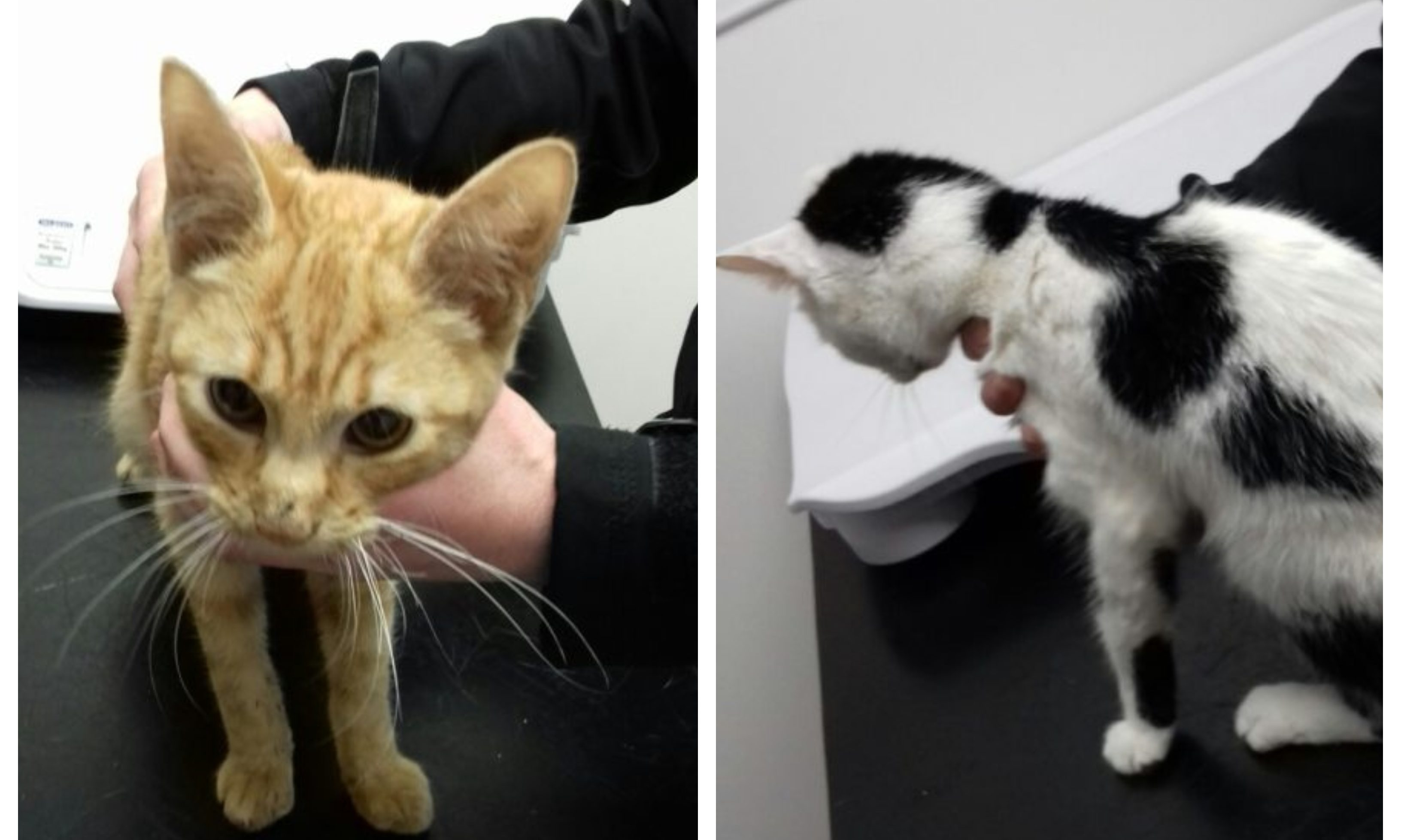 Paul Kyle, of Ballingry, admitted causing unnecessary suffering to his two cats.